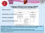 7 amplified rdna restriction analysis ardra pcr rflp analysis of the 16s rrna gene
