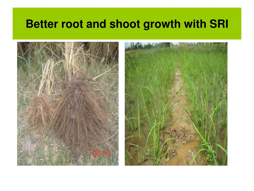 Better root and