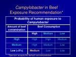 campylobacter in beef exposure recommendation