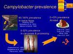 campylobacter prevalence