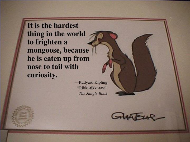 Mongoose Motto