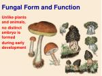 fungal form and function5