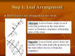 step 1 leaf arrangement