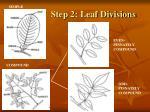 step 2 leaf divisions