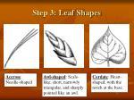 step 3 leaf shapes