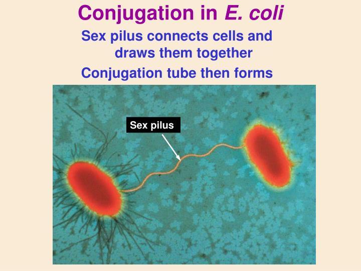 Conjugation in