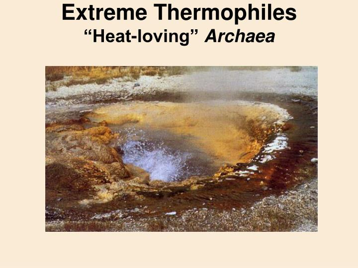 Extreme Thermophiles