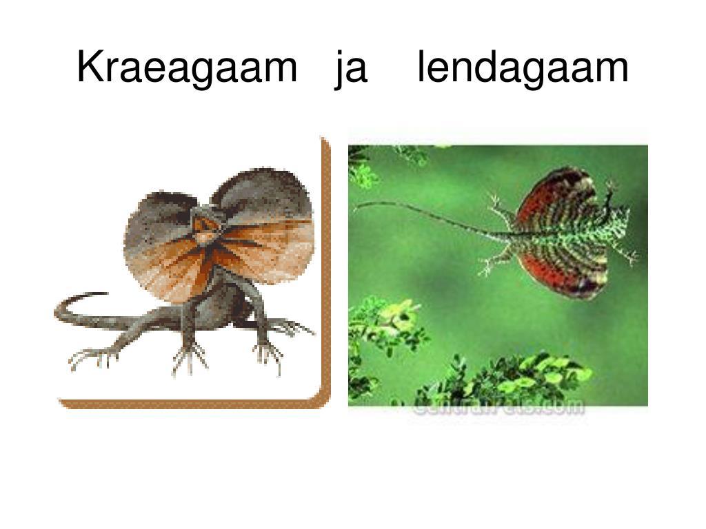 Kraeagaam   ja    lendagaam