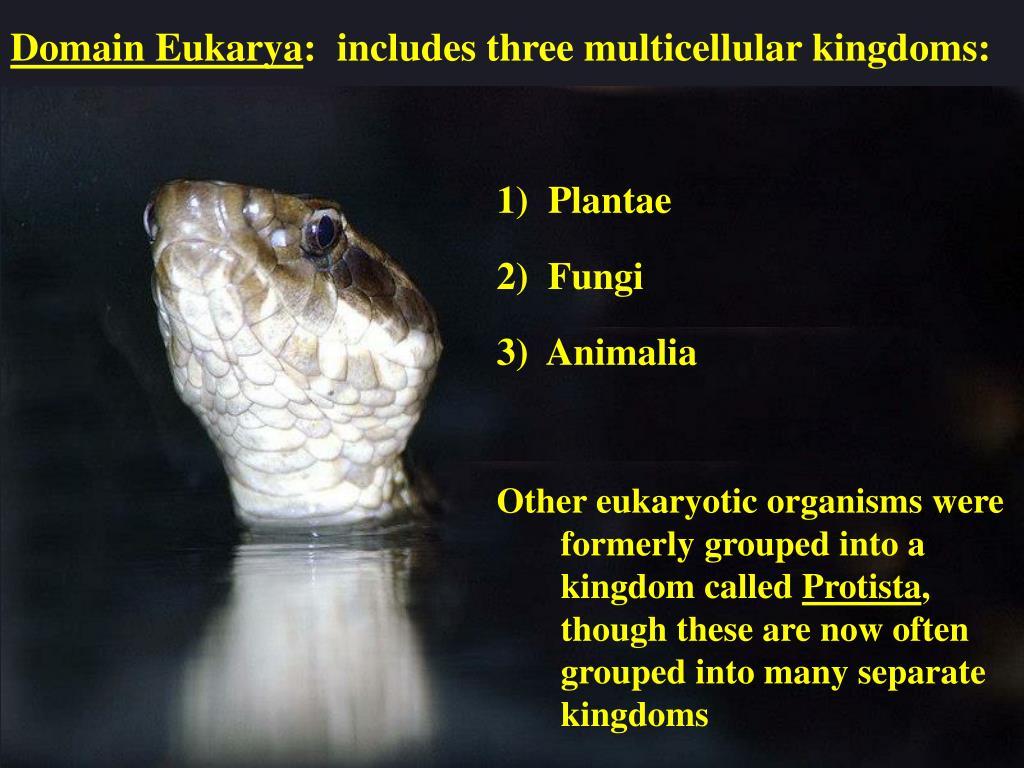 Domain Eukarya