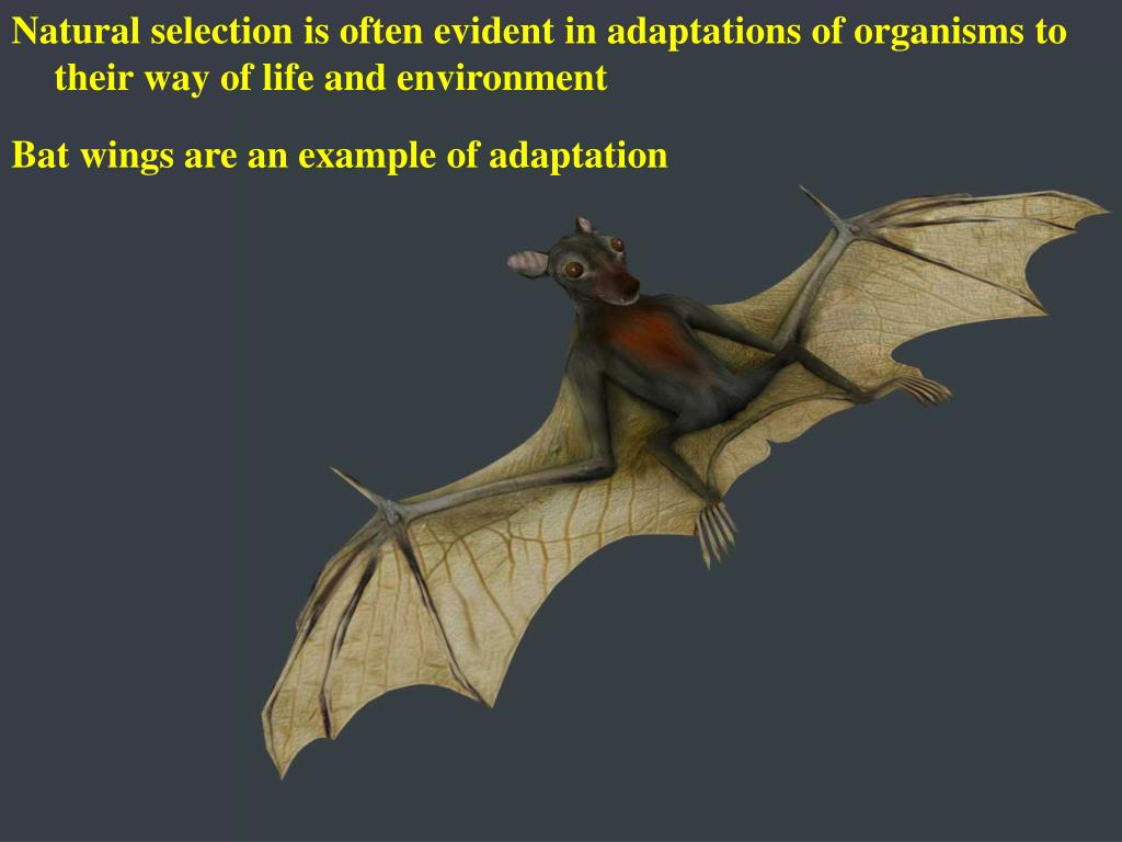 Natural selection is often evident in adaptations of organisms to their way of life and environment