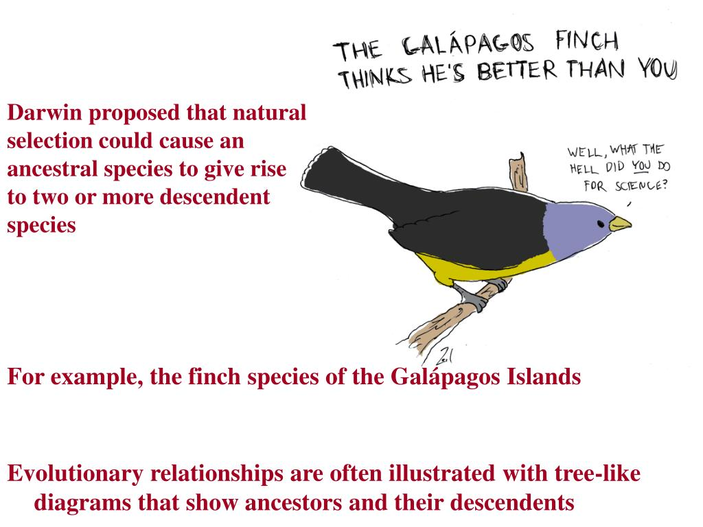 For example, the finch species of the Galápagos Islands