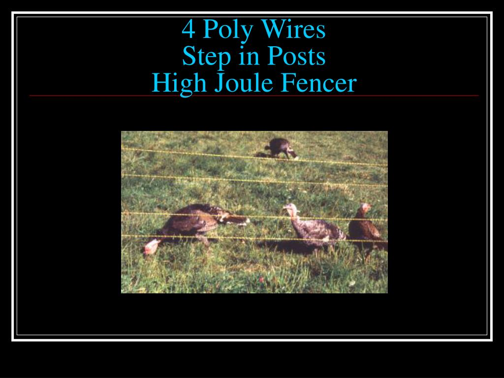 4 Poly Wires