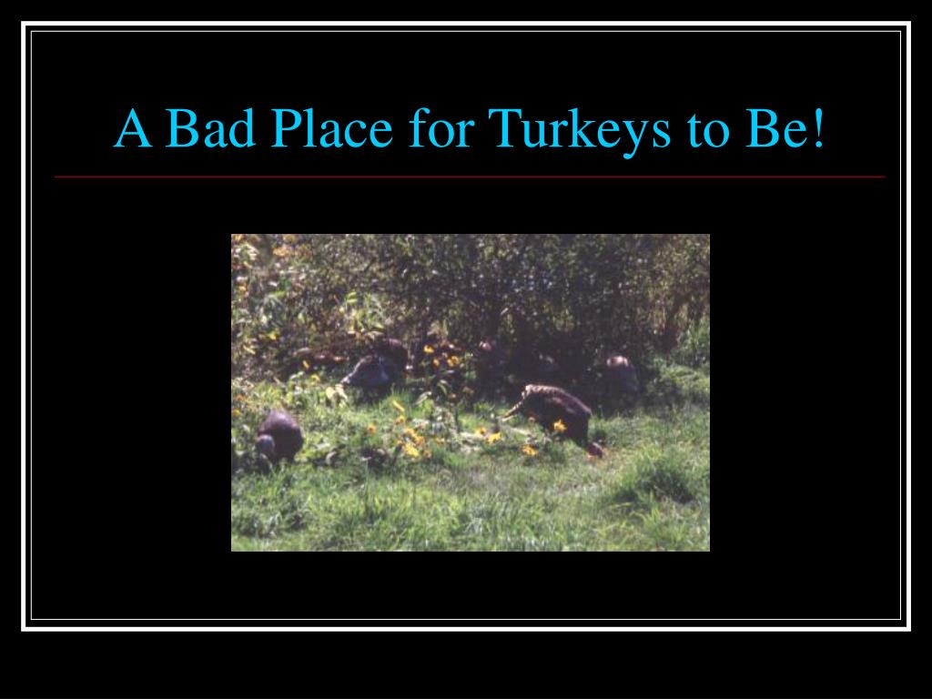 A Bad Place for Turkeys to Be!