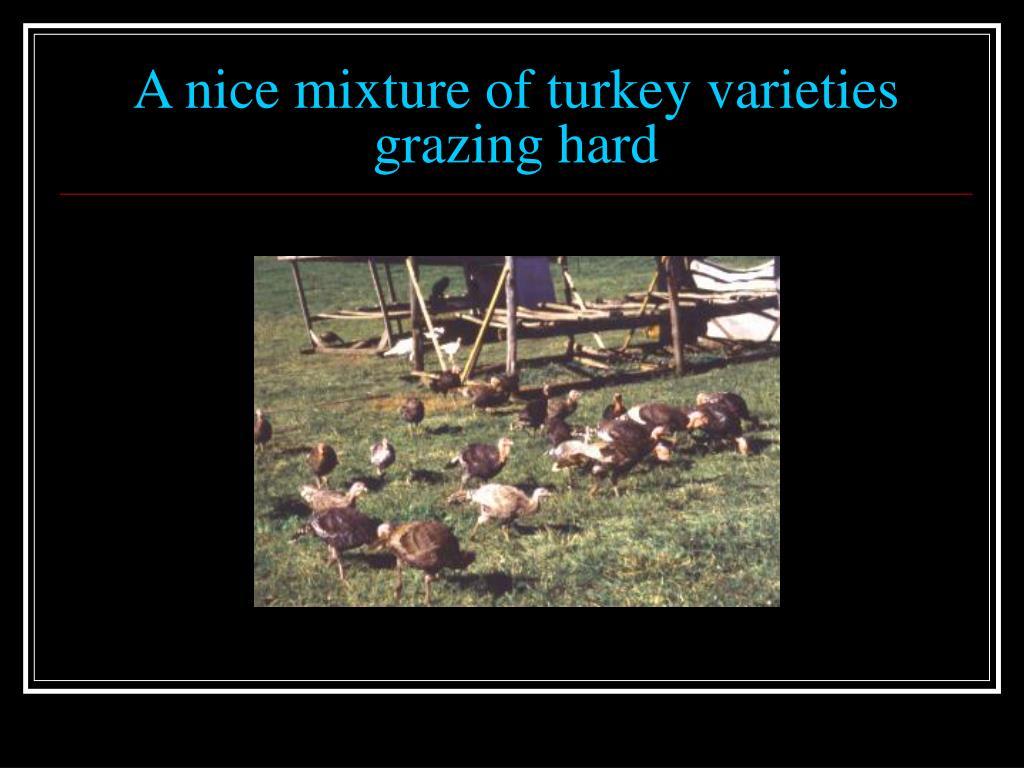 A nice mixture of turkey varieties