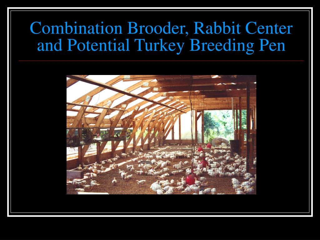Combination Brooder, Rabbit Center and Potential Turkey Breeding Pen