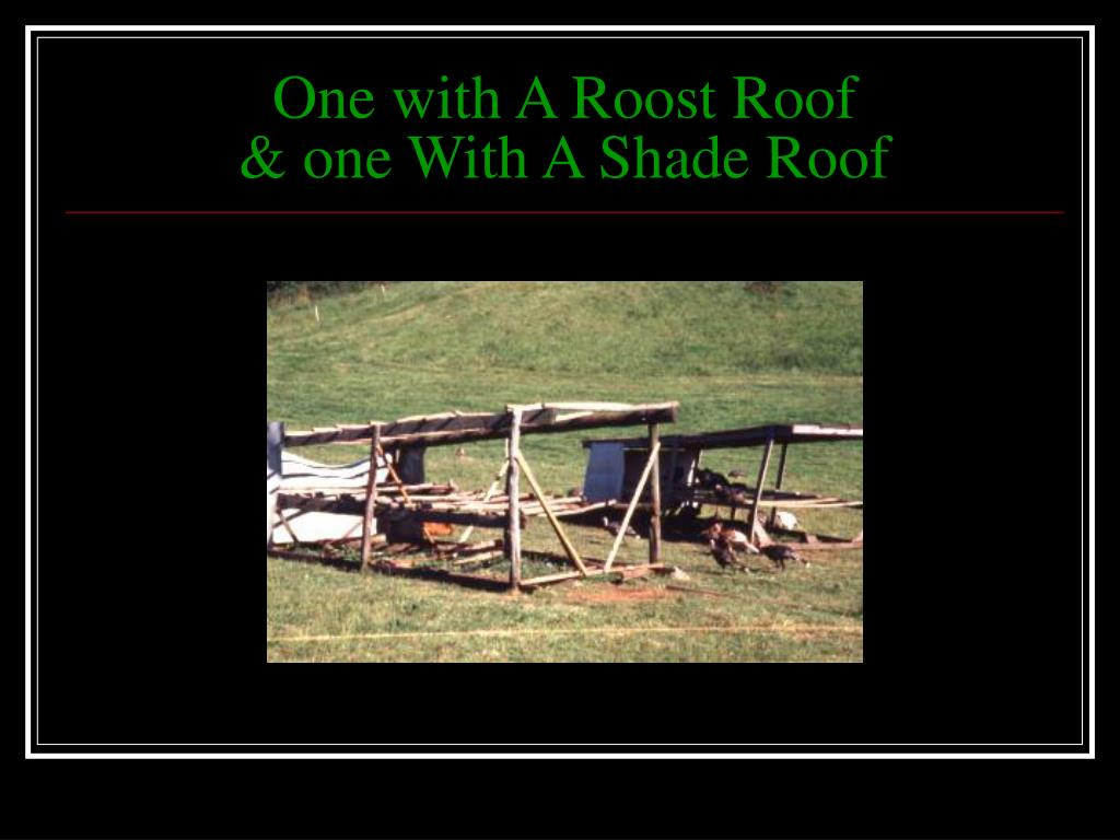 One with A Roost Roof