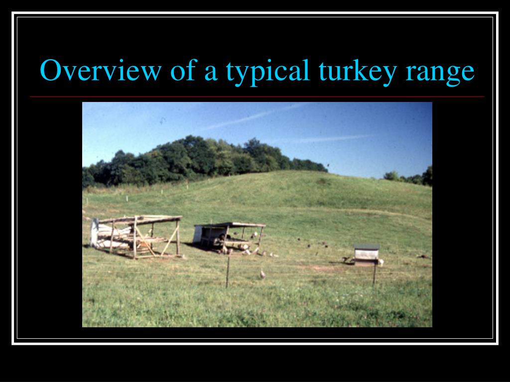 Overview of a typical turkey range
