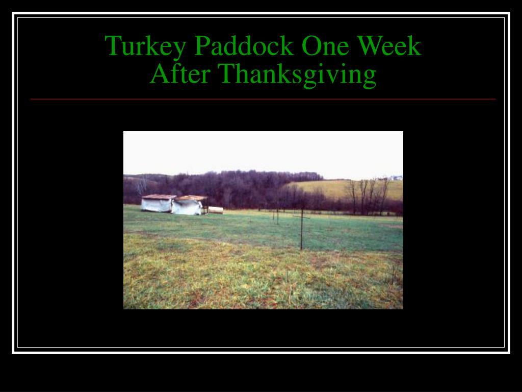 Turkey Paddock One Week