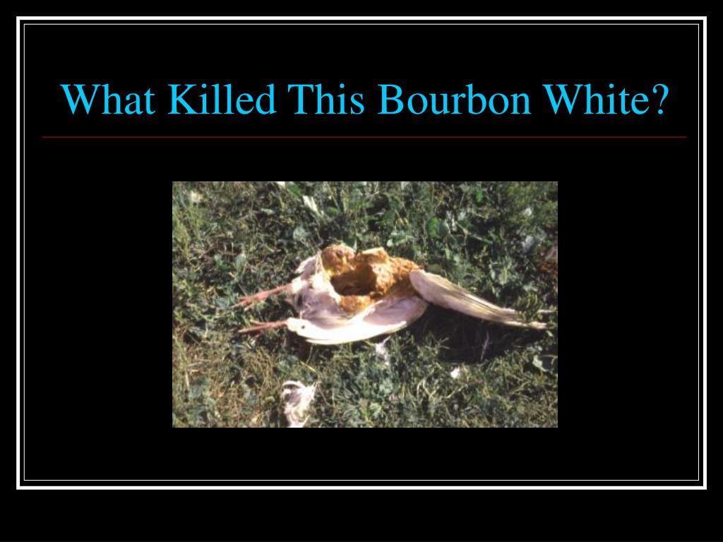 What Killed This Bourbon White?