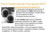 cos il bacillo naturale thuringiensis bt
