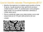 cos il bacillo naturale thuringiensis bt1