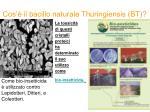 cos il bacillo naturale thuringiensis bt2