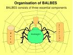 organisation of balbes