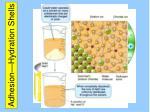 adhesion hydration shells