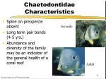 chaetodontidae characteristics