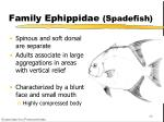 family ephippidae spadefish