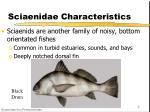 sciaenidae characteristics
