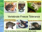 vertebrate freeze tolerance