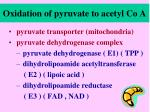 oxidation of pyruvate to acetyl co a