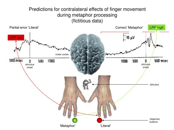 Predictions for contralateral effects of finger movement