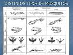 distintos tipos de mosquitos