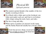 physical id spilogale putorius