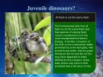 juvenile dinosaurs
