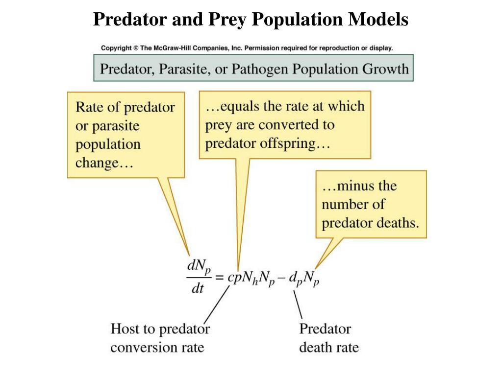 Predator and Prey Population Models