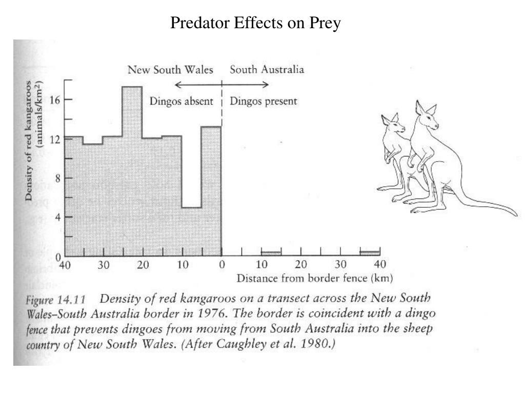 Predator Effects on Prey
