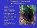 ga mammals threatened round tailed muskrat