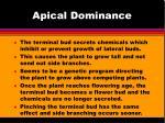 apical dominance