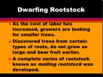 dwarfing rootstock