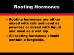 rooting hormones1