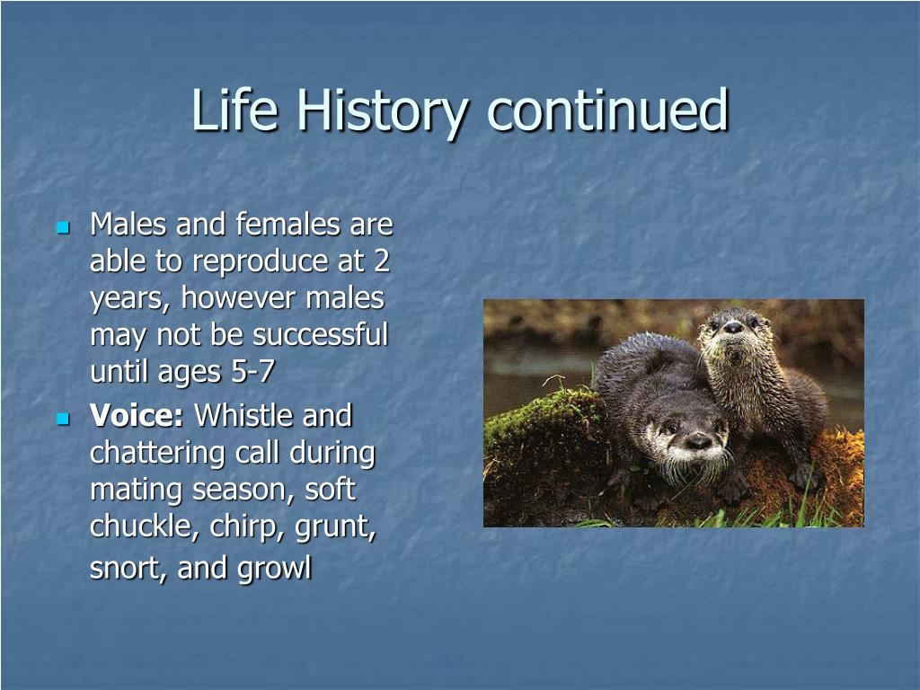 Males and females are able to reproduce at 2 years, however males may not be successful until ages 5-7
