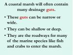 a coastal marsh will often contain many drainage guts