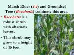 marsh elder iva and groundsel tree baccharis dominate this area