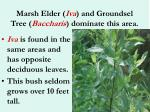 marsh elder iva and groundsel tree baccharis dominate this area35