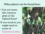 other plants can be found here