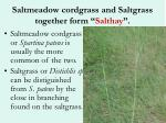 saltmeadow cordgrass and saltgrass together form salthay