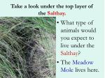take a look under the top layer of the salthay